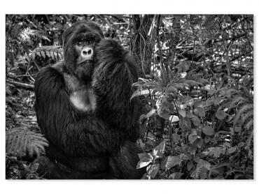 Tableau animaux jungle primate