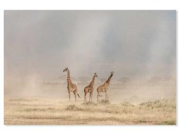 Tableau animaux girafes dans la savane