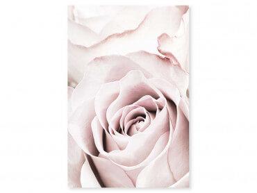 Tableau fleurs rosa romantica