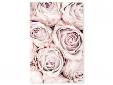 Tableau fleurs rosa alba