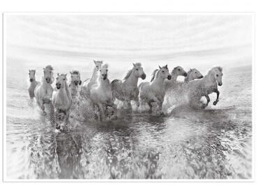 Affiche animaux camarguais au galop