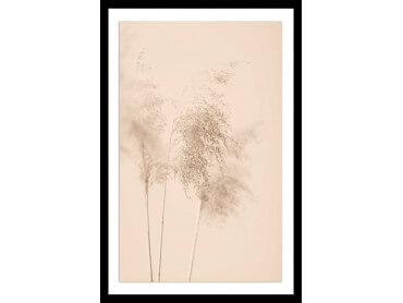 Affiche fleurs des champs sauvages