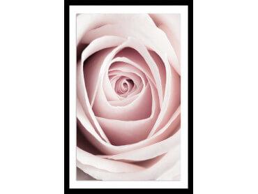 Affiche fleurs coeur de roses
