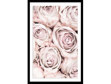 Affiche fleurs rosa alba