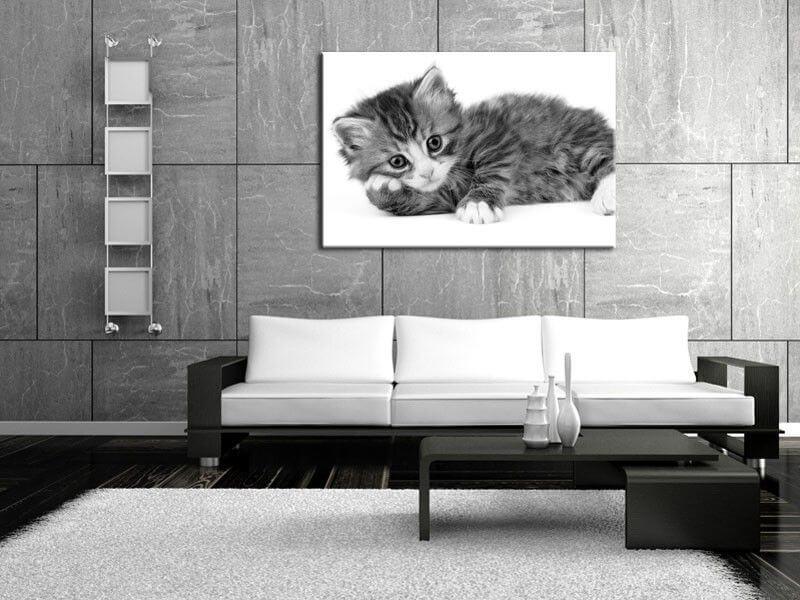 Cadre chat noir et blanc d coration murale moderne hexoa for Tableau noir et rose