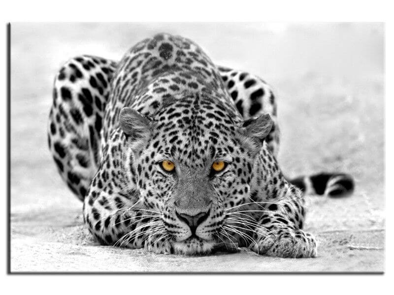 tableau d co animaux leopard noir et blanc achat en ligne hexoa. Black Bedroom Furniture Sets. Home Design Ideas