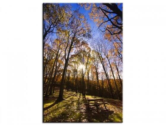 Tableau photo décor forêt en automne