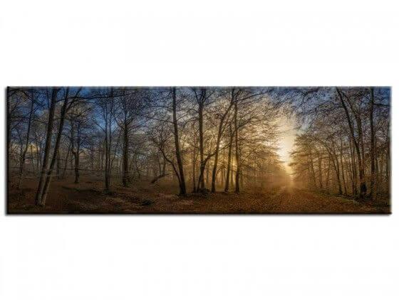 Tableau panorama coucher de soleil sous bois
