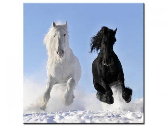 Tableau photo chevaux