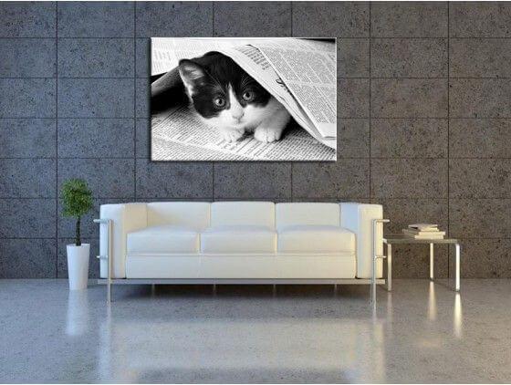 d coration moderne chat noir et blanc tableaux pas chers hexoa. Black Bedroom Furniture Sets. Home Design Ideas