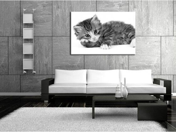 cadre chat noir et blanc d coration murale moderne hexoa. Black Bedroom Furniture Sets. Home Design Ideas