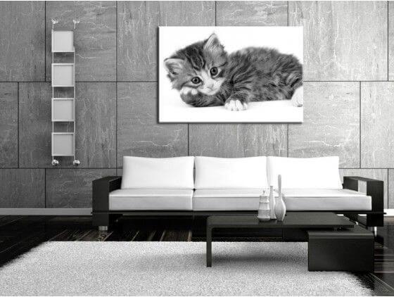 Cadre chat noir et blanc d coration murale moderne hexoa for Tableau deco noir et blanc