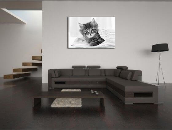 cadre moderne chaton noir et blanc prix r duit. Black Bedroom Furniture Sets. Home Design Ideas