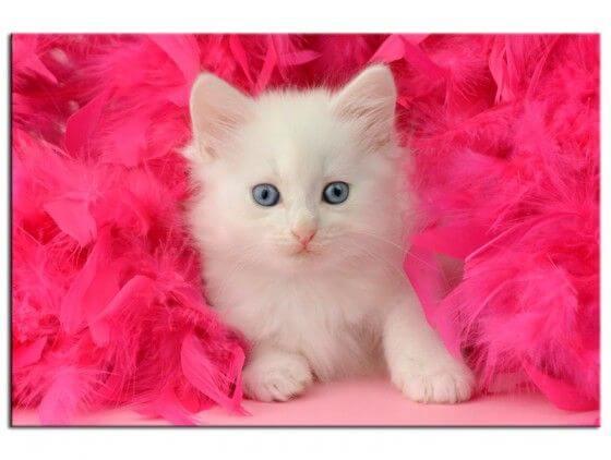 Tableau déco petit chat blanc dans plumes roses