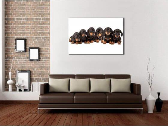 tableau d co animaux toile plexi alu d co murale pas ch re. Black Bedroom Furniture Sets. Home Design Ideas