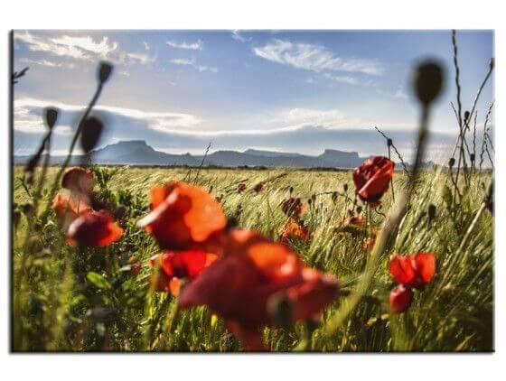 Tableau photo paysage Les Bardenas