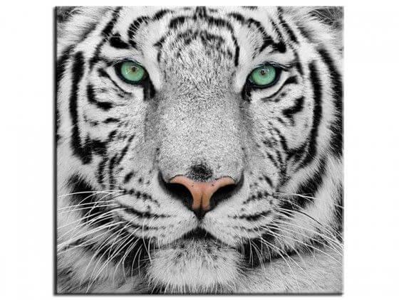 Tableau design tête de tigre de Sumatra