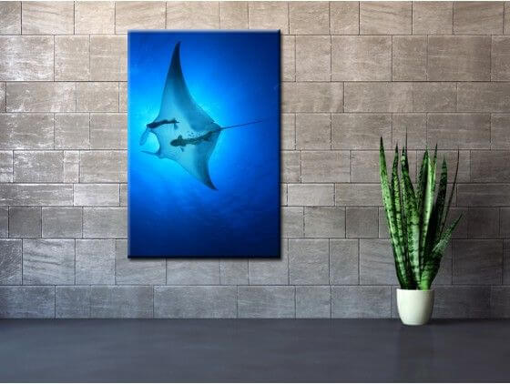 Tableau photo animaux poisson raie manta