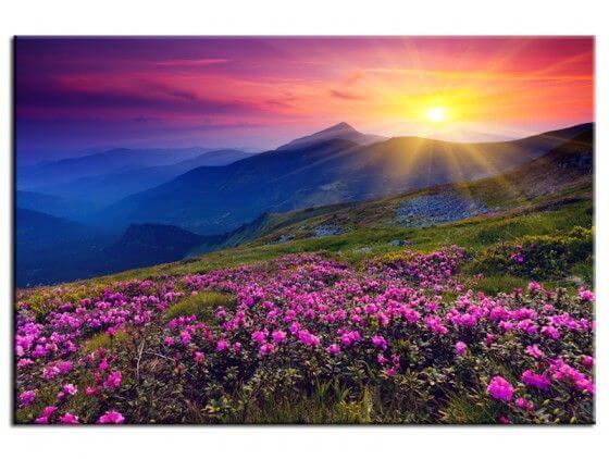 Tableau deco coucher de soleil sur champ de fleurs