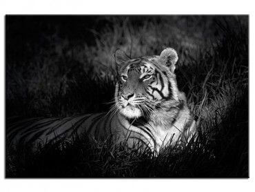 Tableau photo déco tigre