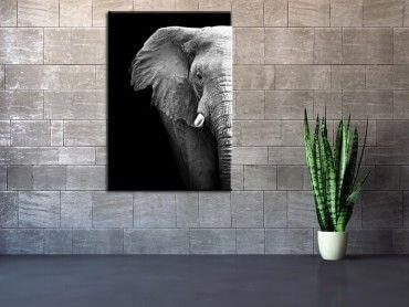 Tableau moderne photo éléphant