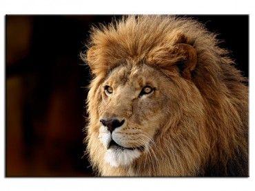 Tableau photo lion
