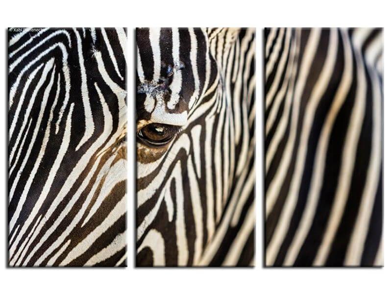 tableau en toile plexi ou alu z bre tableaux animaux hexoa