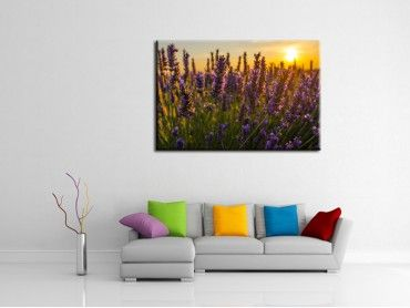 Tableau photo lavender Sunset