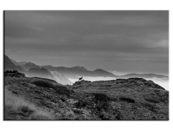Tableau photo paysage Chamois et Mercantour