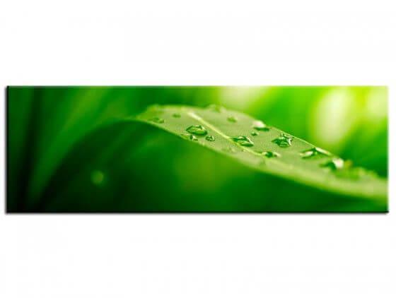 Tableau deco feuille verte goutte d'eau