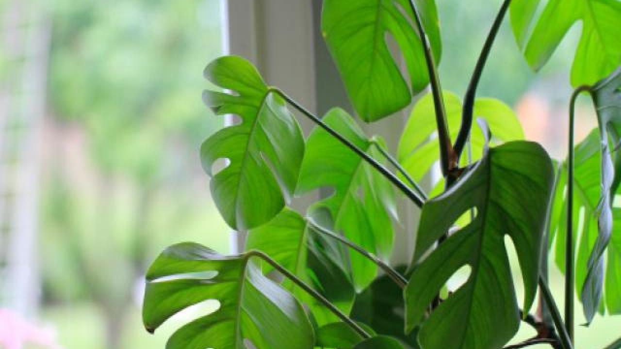 les bienfaits des plantes int rieures conseils deco On plantes interieures