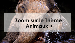 tableau animaux
